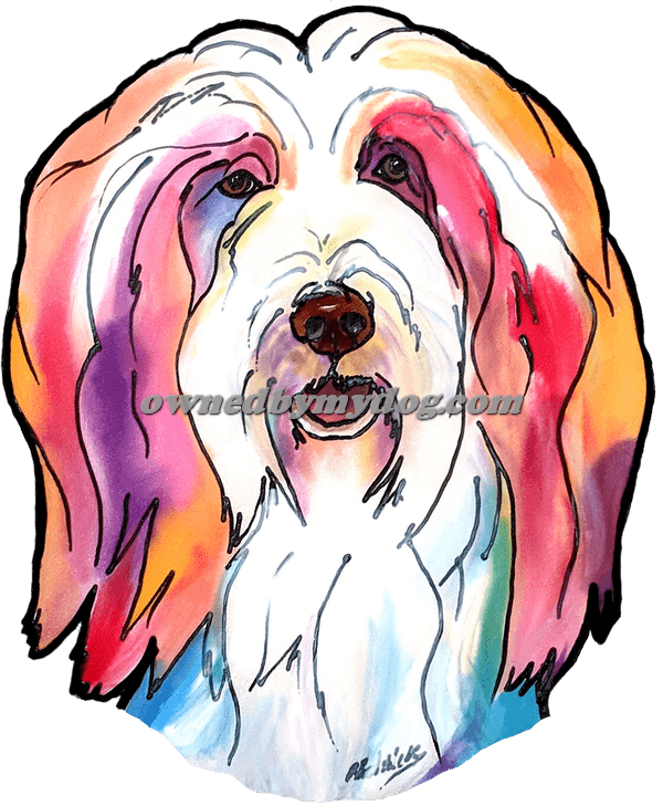 Bearded Collie 2