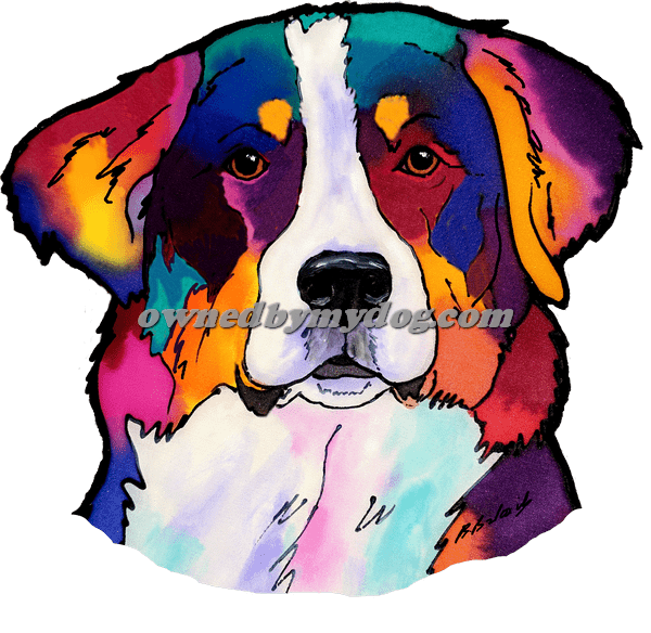 Bernese Mountain Dog 1