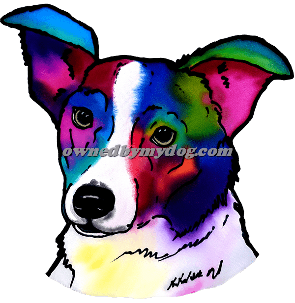 Border Collie 5