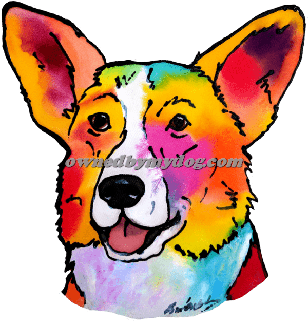 Cardigan Welsh Corgi 2