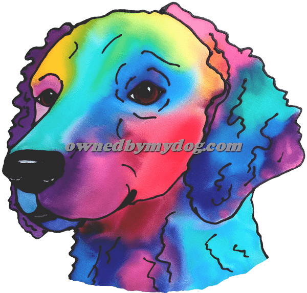Curley Coated Retriever 2