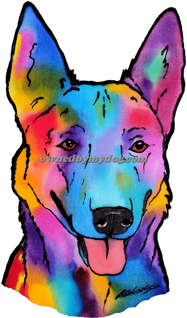 Dutch Shepherd available with dark eyes