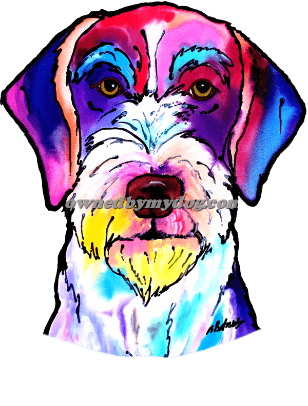 German Wirehaired Pointer 2