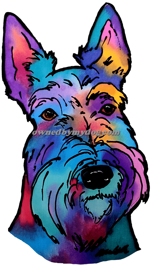 Scottish Highland Terrier 1