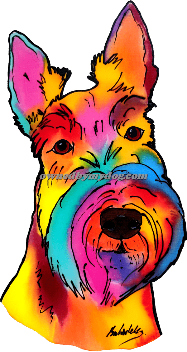 Scottish Highland Terrier 3